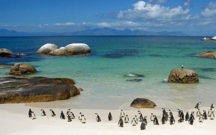 Boulders Beach à Cape Town – AFRIQUE DU SUD