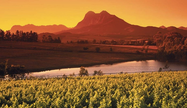 Vignoble d'Afrique du Sud