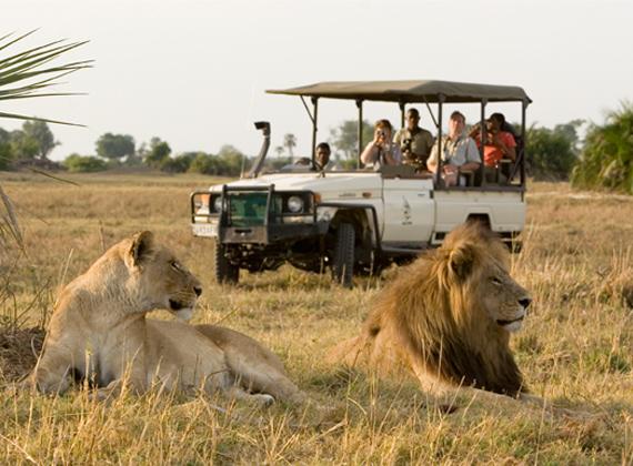 5 idées africaines qui ont changé le monde : Safari