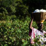 COP21 : Réchauffement climatique - Quel impact sur l'agriculture en Afrique...